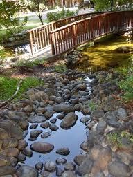 Family Camp - Pond